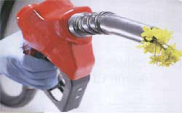 Les dérapages du biocarburant